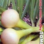 Лук на зелень и мини-головку Помпеи семена Биотехника