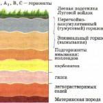 Строение почвенного профиля дерново подзолистой почвы