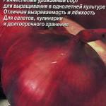 Лук Ред Барон семена