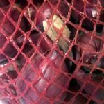 Лук-севок Реда Барон Лукаморе в сетке