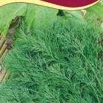Укроп Лесногородский семена